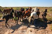 Runaway koni — Zdjęcie stockowe