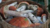 Kosz z różnych grzybów jadalnych. — Zdjęcie stockowe