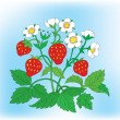 Bush of a blossoming strawberry with berries. — Stock Vector