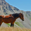Solitary horse — Stock Photo