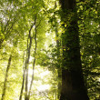 Trees in forest — Stockfoto #6977934