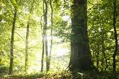 Drzewa w lesie — Zdjęcie stockowe