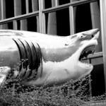 Great White Urban Shark — Stock Photo #6749293