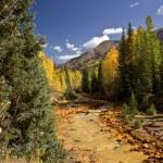 Scenic Mountain Stream in Autumn — Stock Photo