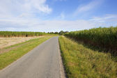 Elephant grass road — Stock Photo
