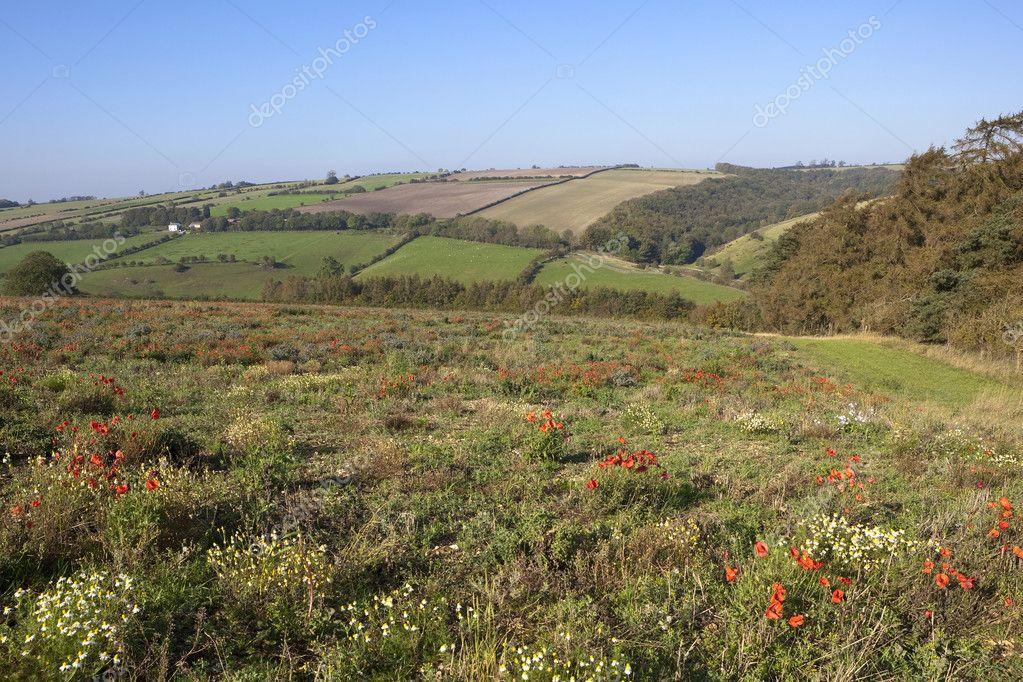 Пейзажи и цветы осенние картинки