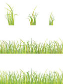 Variation of grass — Stock Vector