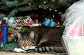 クリスマス ツリーの下に猫 — ストック写真