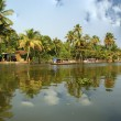 Stock Photo: Coconut palms on shore of lake. Kerala, South India