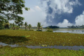 Backwaters or swamps in the jungles of Kerala, India — Stock Photo