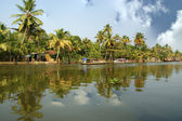 Coconut palms on the shore of the lake. Kerala, South India — Stock Photo