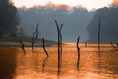 Lake, Periyar National Park, Kerala, India — Stock Photo
