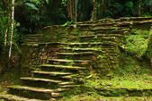 Stone Stairs Leading to a Terrace in Ciudad Perdida, Colombia — Stock Photo