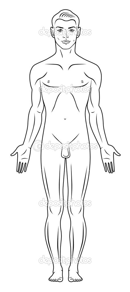 Full lenght front view of a standing naked man. You can use this image for fashion design and etc.  Stock Vector #6884989