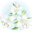 White lilly — Stock Vector #6897796