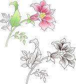 Fiore rosa e delineato, sfondo floreale — Vettoriale Stock