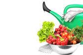 Arrosoir et légumes. — Photo