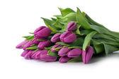 Violet tulips — Stock Photo