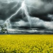 Thunderstorm under alone tree — Stock Photo