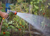 Watering garden — Stock Photo