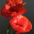 Stock Photo: Three poppies