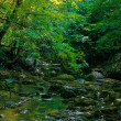 Forest river - Stok fotoraf