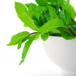 Mint in bowl — Stock Photo