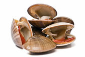 Fresh smooth clams. — Stock Photo