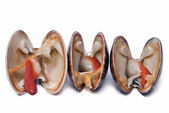 Three clams. — Stock Photo