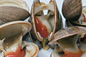 Closeup from some clams. — Stock Photo