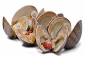 Clams over white. — Stock Photo