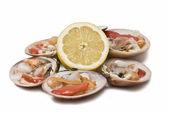 Fresh clams and lemon. — Stock Photo