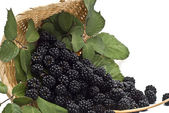 Closeup from some blackberries in a basket. — Stock Photo