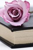 Fresh rose o the book. — Stock Photo