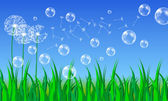Beautiful summer meadow with dandelions — Stock Vector