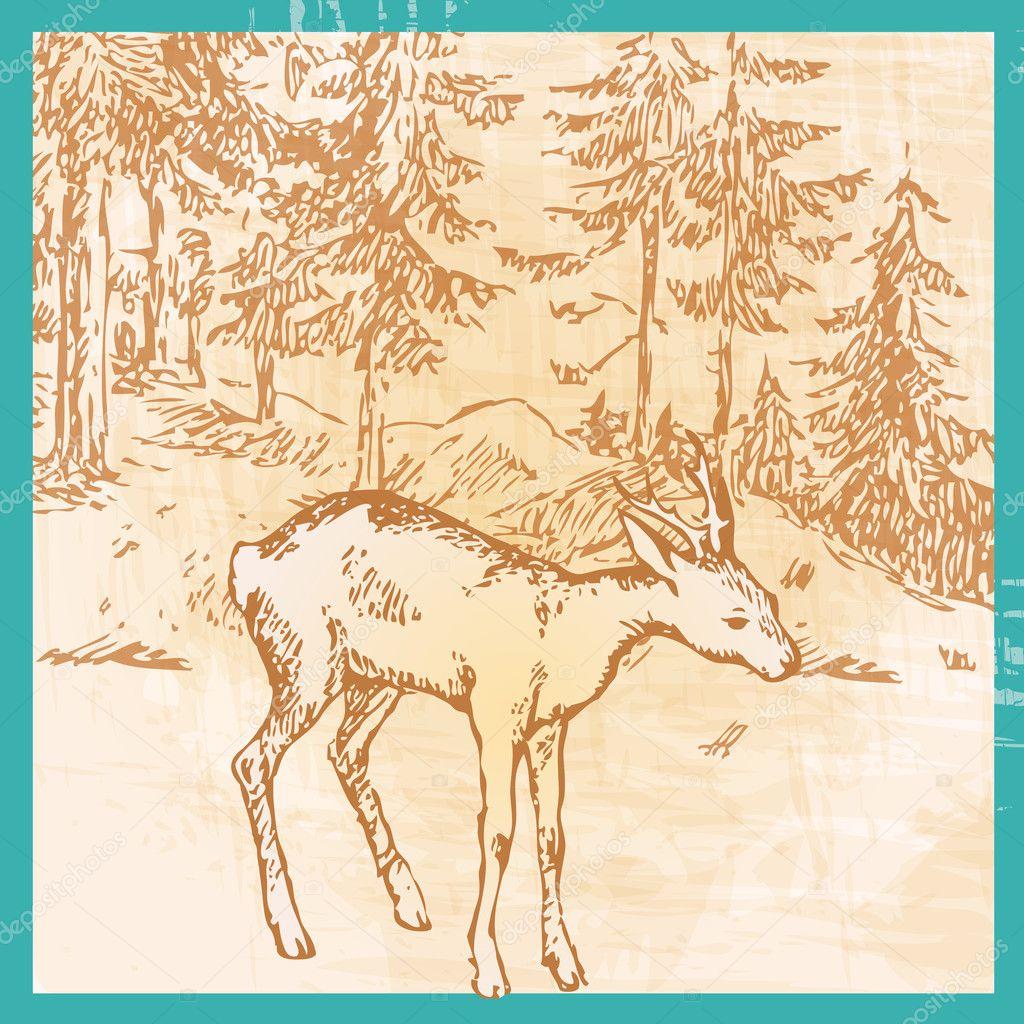Deer antlers  Etsy