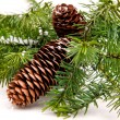Cone and christmas tree isolated on white — Stock Photo #7170697