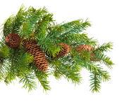 Cono y el árbol de navidad aislado en blanco — Foto de Stock