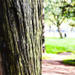 Tree (Wood) - Stock Photo