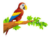 Macaw cartoon — Stock Vector