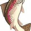 Stock Vector: Trout fish