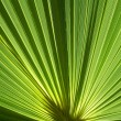 Palm fronds — Stock Photo