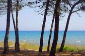 Tallskog på seglar utmed kusten — Stockfoto