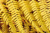 Fern leaves — Stock Photo