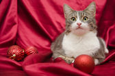 Domestic cat with New Year toys — Stock Photo