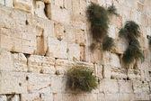 Närbild på västra väggen. jerusalem. israel. — Stockfoto