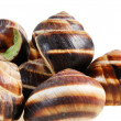 Bourgogne snails with garlic butter — Stock Photo #7076709