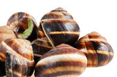 Bourgogne snails with garlic butter — Stock Photo