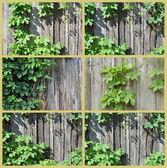 Plot a rostlin — Stock fotografie