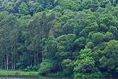Lake with wood — Stock Photo